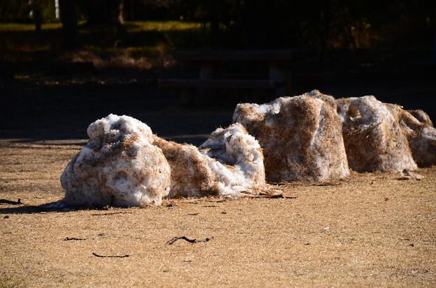 中央芝生に残っていた雪~