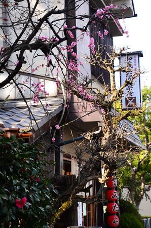 加茂みたらし茶屋の紅梅