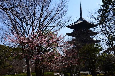 河津桜と五重塔