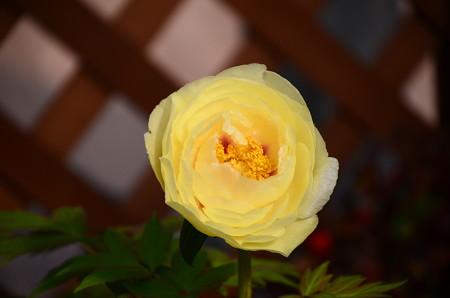 黄冠(オウカン)