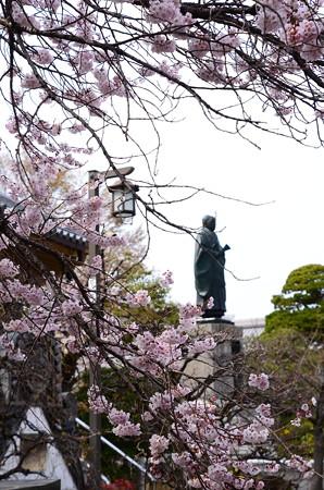 宥清寺の桜