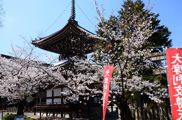 本法寺の染井吉野(ソメイヨシノ)