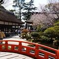 Photos: 上賀茂神社の桜風景
