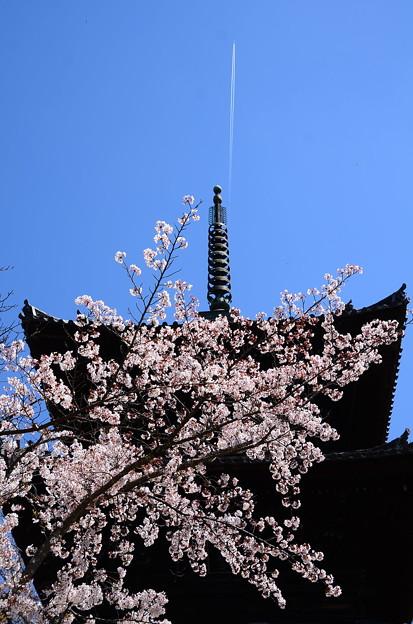 文殊塔と染井吉野