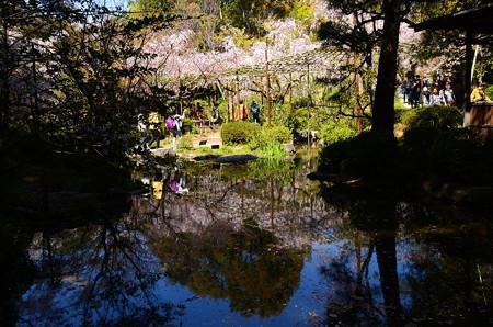池に映る春