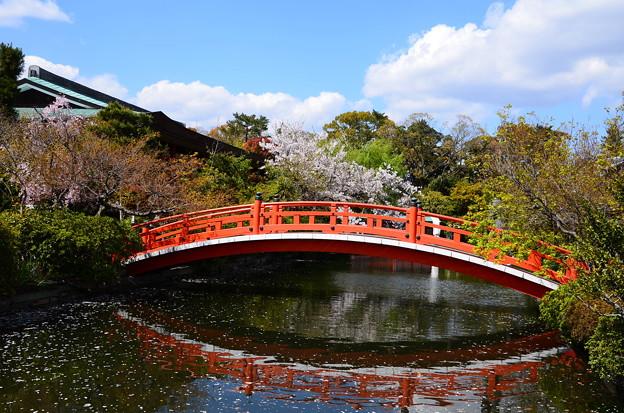 神泉苑の桜風景