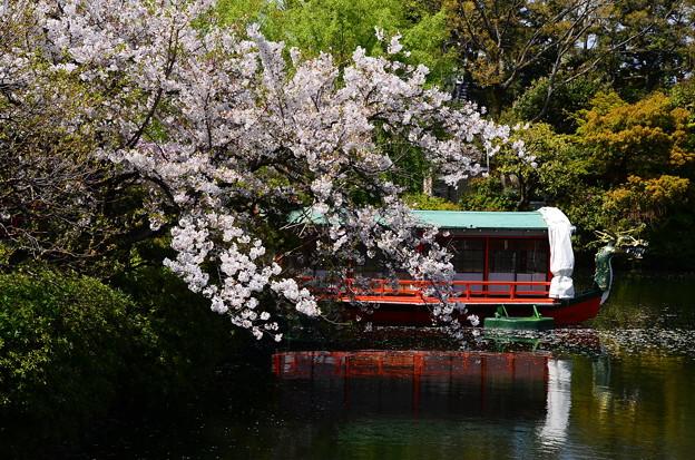 桜の神泉苑