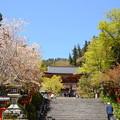 Photos: 桜の鞍馬寺