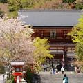 Photos: 仁王門前の桜