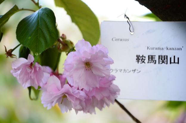 鞍馬関山(クラマカンザン)