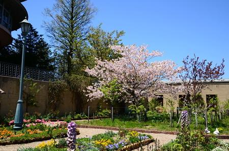 ガーデンミュージアム比叡の桜