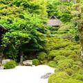 Photos: 初夏の金福寺