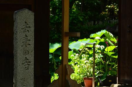 初夏の去来の寺