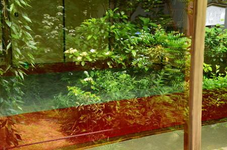 ガラス窓の初夏
