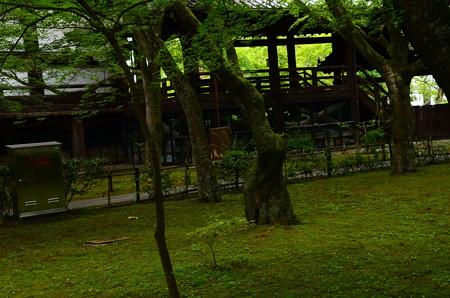 緑の真如堂
