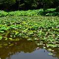 氷室池の鷺