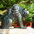 Photos: 阿の狛虎