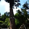 Photos: 大杉社