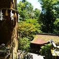 Photos: 由岐神社の大杉