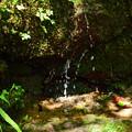 Photos: 湧き水