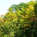 Photos: 少し色づいた化野念仏寺