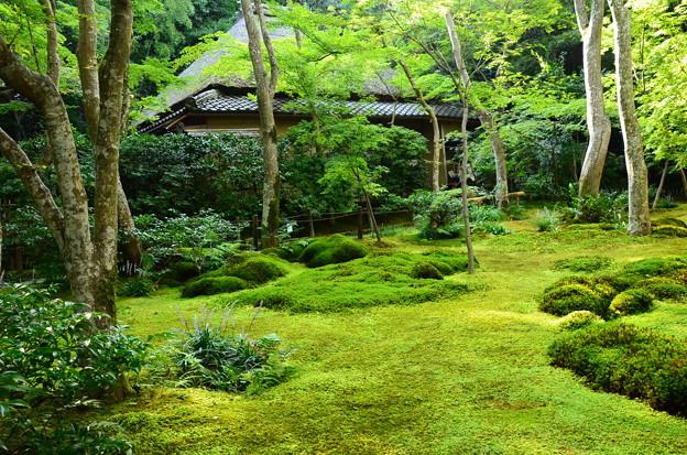 緑の祇王寺