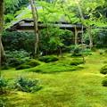 Photos: 緑の祇王寺