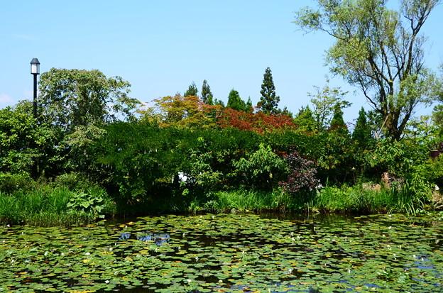 モネの池脇の色づき