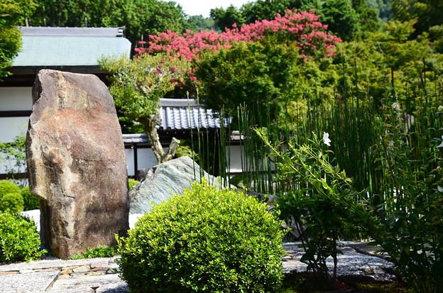Photos: 桔梗と百日紅