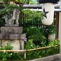 晴明神社の桔梗(キキョウ)