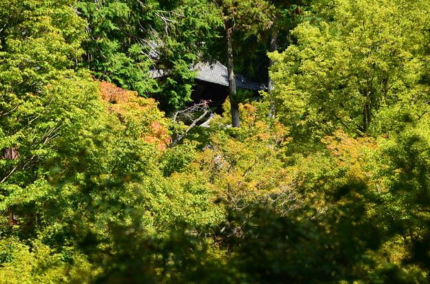 色づき始めた東福寺