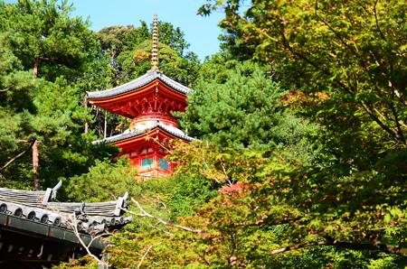 色づき始めた今熊野観音寺