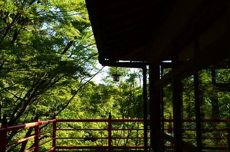 色づきを待つ今熊野観音寺