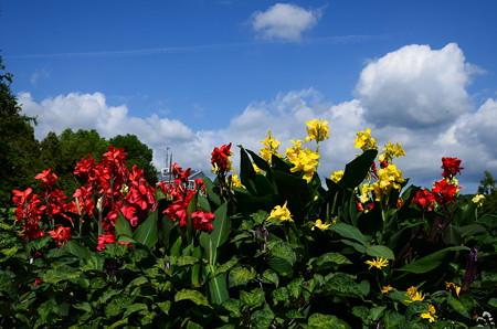 まだ夏空、夏の花