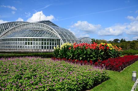 まだ夏空の府立植物園