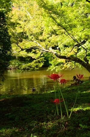 池脇の彼岸花