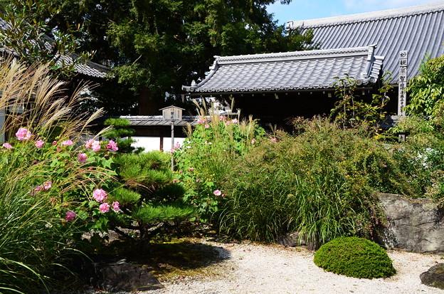 秋の花咲く天寧寺