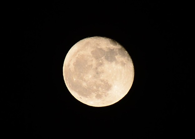 昨夜のお月様