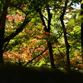 Photos: 塀越しの紅葉
