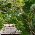 Photos: 安楽寺の色づき?