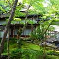Photos: まだ緑の常寂光寺