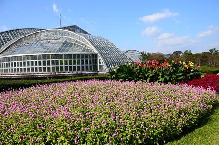 秋空の府立植物園