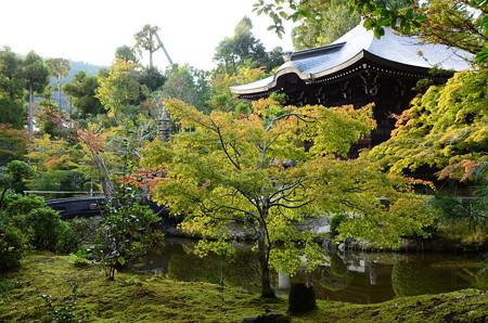 清涼寺庭園の色づき