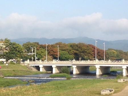 色づき始めた賀茂川