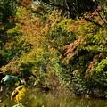 Photos: 蓮池脇の色づき