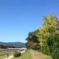 Photos: 秋晴れの賀茂川