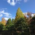 Photos: 秋空に~
