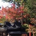 Photos: 今宮神社の色づき