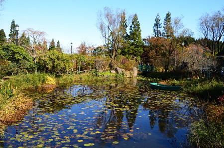 秋色のモネの池