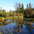 Photos: 秋色のモネの池